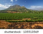 View Across Vineyards Of The...