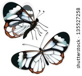 butterfly with transparent... | Shutterstock .eps vector #135527258