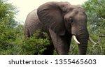 elephants in the savannah  park ... | Shutterstock . vector #1355465603