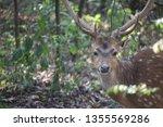 deer animal wild wildife