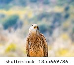 close up portrait of cute... | Shutterstock . vector #1355669786
