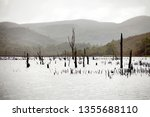 views of lake burbury  which is ... | Shutterstock . vector #1355688110