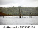 views of lake burbury  which is ... | Shutterstock . vector #1355688116
