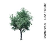 single tree isolated on white... | Shutterstock . vector #1355740880