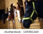 Color Shot Of Some Horses In A...