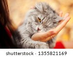gray cat in females hands ... | Shutterstock . vector #1355821169