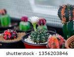 close up flower of... | Shutterstock . vector #1356203846