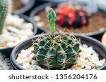 close up flower of... | Shutterstock . vector #1356204176