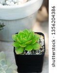 close up image of echeveria... | Shutterstock . vector #1356204386