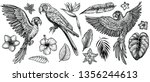 parrots with tropical flowers ... | Shutterstock .eps vector #1356244613