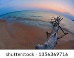 ld wood snag on tropical beach ... | Shutterstock . vector #1356369716