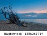 ld wood snag on tropical beach ... | Shutterstock . vector #1356369719