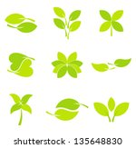 green leaves collection. vector ... | Shutterstock .eps vector #135648830