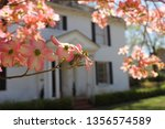 pink dogwood with southen...   Shutterstock . vector #1356574589