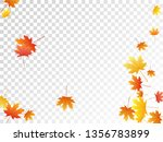 maple leaves vector  autumn... | Shutterstock .eps vector #1356783899