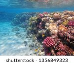 coral reef in egypt as nice... | Shutterstock . vector #1356849323