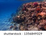 coral reef in egypt as nice... | Shutterstock . vector #1356849329