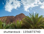 palm branches against the high... | Shutterstock . vector #1356873740