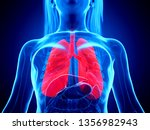 3d rendered medically accurate...   Shutterstock . vector #1356982943