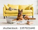cute german shepherd lying on... | Shutterstock . vector #1357021640