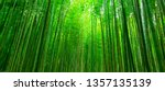 Blurred Images Of Bamboo Forest ...