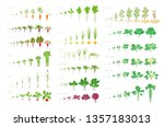 vegetables agricultural plant ... | Shutterstock .eps vector #1357183013