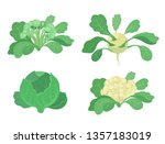 cabbage set. broccoli kohlrabi... | Shutterstock .eps vector #1357183019