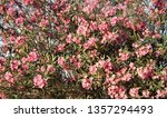 amazing cluster of bright pink... | Shutterstock . vector #1357294493
