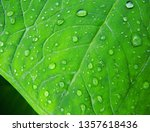 green leaf and rain drops. | Shutterstock . vector #1357618436
