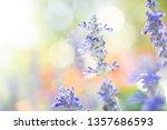 fresh  blue salvia flower in... | Shutterstock . vector #1357686593