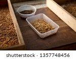 many living mealworm larvae... | Shutterstock . vector #1357748456