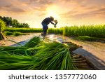 agriculture farmer of asia rice ... | Shutterstock . vector #1357772060