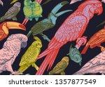 tropical birds. parrots and... | Shutterstock .eps vector #1357877549