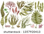 hand drawn colorful edible... | Shutterstock .eps vector #1357920413