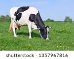 cow on a summer pasture | Shutterstock . vector #1357967816