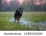 happy dog running directly at... | Shutterstock . vector #1358142320