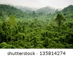 vietnamese jungle  ha tinh...   Shutterstock . vector #135814274