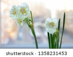 blooming daffodils on the... | Shutterstock . vector #1358231453