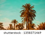 palm trees with orange and teal ... | Shutterstock . vector #1358371469