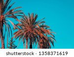palm trees against blue sky.... | Shutterstock . vector #1358371619