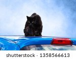 Stock photo black cat or hangover on a blue car roof 1358566613