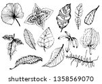 collection of  leaves.abstract... | Shutterstock .eps vector #1358569070