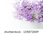 Campanula Bell Flowers On The...