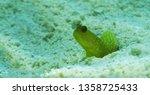 basking in the sun | Shutterstock . vector #1358725433