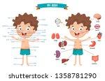 vector illustration of human... | Shutterstock .eps vector #1358781290