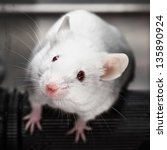 laboratory mice in the rotarod... | Shutterstock . vector #135890924