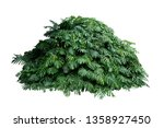 tropical leaves foliage plant... | Shutterstock . vector #1358927450