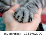cute fluffy cat paw on hand.... | Shutterstock . vector #1358962700