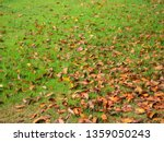 dry leaf on ground.  natural... | Shutterstock . vector #1359050243