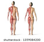 man and woman muscles and... | Shutterstock . vector #1359084200
